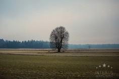 anna_evgeny_-winter-wedding-photography0059